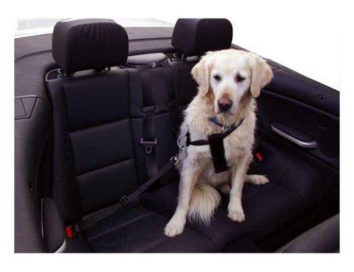 Artikelbild: Kerbl 83254 Autosicherheitsgurt Größe M, schwarz, größenverstellbar