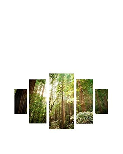 "Ariane Moshayedi ""Muir Woods"" 5-Panel Art Set, 43″ x 34″"