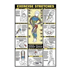 Exercise Stretches Chart