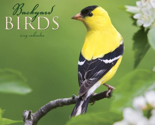Backyard Birds 2009 Calendar