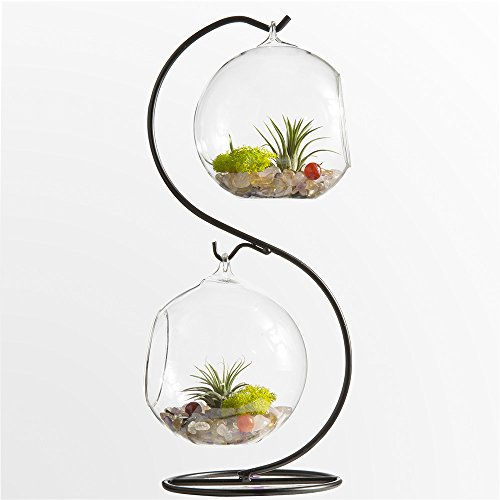 Mkono Glass Vase Plant Terrarium with Metal Stand, 2 Globe