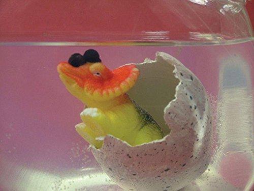 BUSDUGA Wachsender Dinosaurier im Ei (groß) – 11cm – ins Wasser legen und nach 12 bis 24 Stunden schlüpft der Dino bestellen