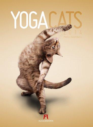 Yoga Cats 2014