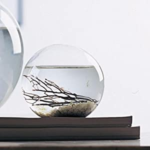 "Small 4"" Round EcoSphere"