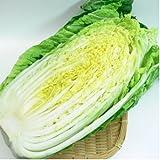 長野県産 白菜 6個入り 1箱