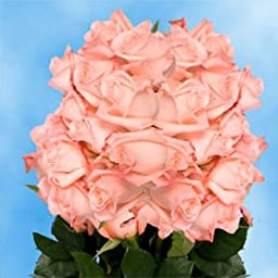 75 Fresh Cut Peach Pink Roses | Peckoubo Roses | Fresh Flowers Express Delivery | Perfect for Birthdays, Anniversary or any occasion.