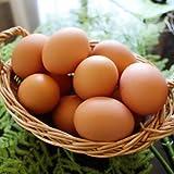 くさなぎ農園の有精自然卵 20個(割れ保証一割(2個)含む)【平飼い・朝採り・自家配合飼料】