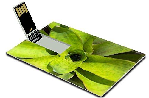 liili-32gb-usb-flash-drive-20-memory-stick-credit-card-size-image-id-21454346-wat-arun-thailand