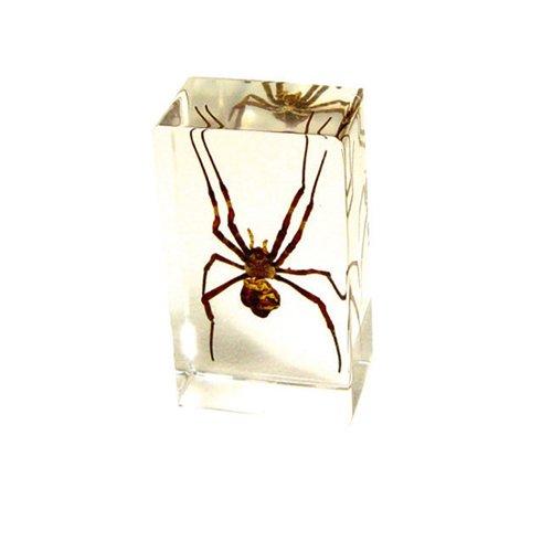 Spider Specimen - 1