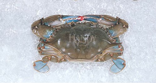 Raw Domestic Soft Shell Crabs (6 ct. Jumbos) - Frozen