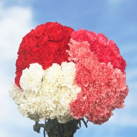 Valentine's Day Carnations Long 300