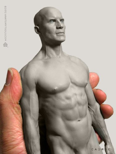 List of Anatomy Human Figure Mannequins for Artists | Parka
