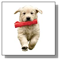 KONG Squeezz Stick Dog Toy, Large, Colors Vary