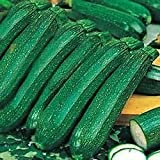 South Eastern Horticultural Kings Vegetable Seeds Courgette Ambassador F1