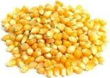 ポップコーン トウモロコシ 1kg popcorn とうもろこし