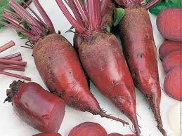 Beet Cylindra Great Heirloom Vegetable 1,500 Seeds