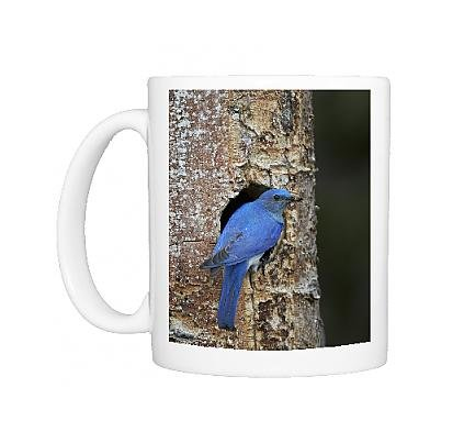 photo-mug-of-male-mountain-bluebird-sialia-currucoides-with-food-at-the-nest-yellowstone