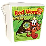 300 Red Wigglers - Red Worms are Great for Organic Gardening and Composting