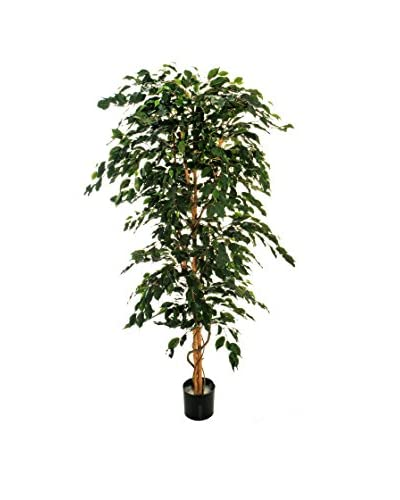 Evergreens Pianta Di Ficus Verde 210 Cm