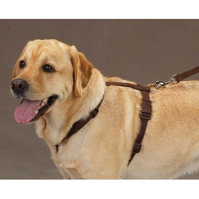 Zack & Zoey 1-Inch Nylon Dog Harness With Nickel-Plated D-Ring And Plastic Buckles, Bluebird