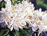 White Rhododendron (Sharon Freeman) - Masterpiece Jigsaw Puzzle 500pc