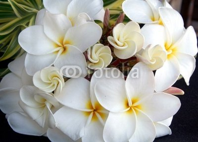 Wallmonkeys Peel and Stick Wall Decals - Plumeria Bouquet - 18