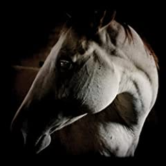 How to Kill a Horse [Explicit]