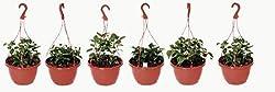 Hanging Pot/Planters, Brown ( set of 6) - SriSai Naturals