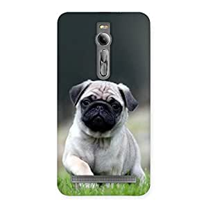 Radiant Cuty Pug Dog Back Case Cover for Asus Zenfone 2