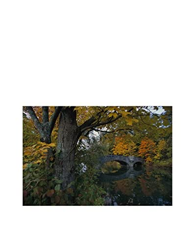 Brewster National Geographic Fall Foliage Wall Mural Decal