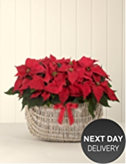 Traditional Poinsettia Basket