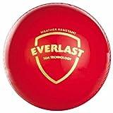 SG Everlast Cricket Balls, Pack of 12