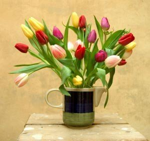 Send Fresh Cut Flowers - 30 Assorted Tulips