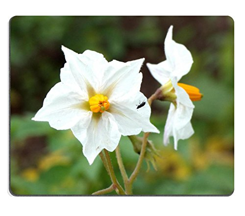 msd-mousepad-beetle-and-potato-flowers-natural-rubber-material-image-19663443506