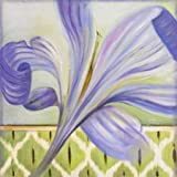 African Lily II By Pinto, Patricia - Fine Art Print On Archival PAPER : 23.5 X 23.5 Inches