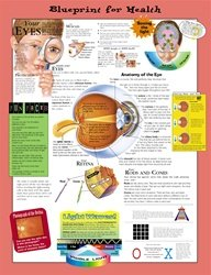 Blueprint for Health Your Eyes Anatomical Chart - Paper