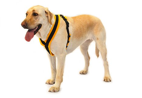 9d023fd3284 If you are looking for an Walkeez Choke Free Dog Harness - . Take a look  here you will find reasonable prices and many special offers.