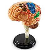 Learning Resources - Cerebro educativo (9,6 cm)