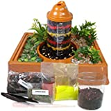 Kids Worm Farm Observation Kit SHIPPED WITH Live Worms