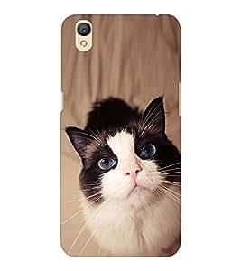 EPICCASE innocent cat Mobile Back Case Cover For OPPO A37 (Designer Case)