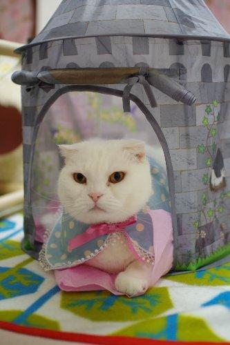 猫壱 キャット テント 朝のお城