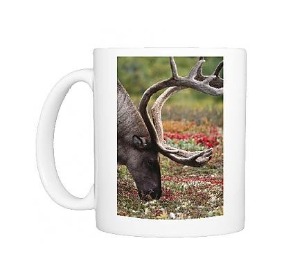 Photo Mug Of Reindeers / Caribou - Male Eating Lichen