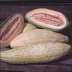Rare Banana Melon 20 seeds $3.99