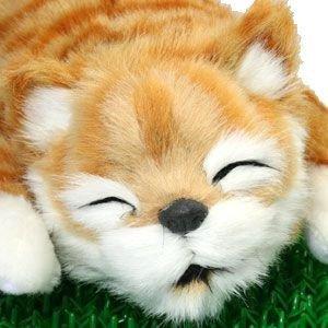 笑い転げる猫