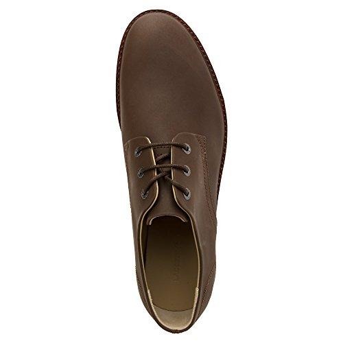 3ad0ea821 Lacoste Men s Sherbrooke 116 1 Oxford - Clothing