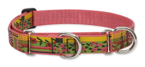 """Lupine 1"""" Flower Patch 19-27 Combo Dog Collar"""