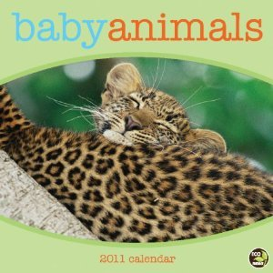 Baby Animals 2011 Wall Calendar