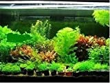 Small Hot Selling 300pcs Aquarium Grass Seeds Mix Water Aquatic Plant Seeds 15 Kinds Family Easy Plant Seeds