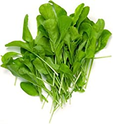 Indian Gardening Arugula Eruca Vegetable Seeds 50 Seeds