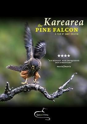 Karearea: the pine falcon